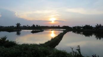 E nas grandes plantações de arroz