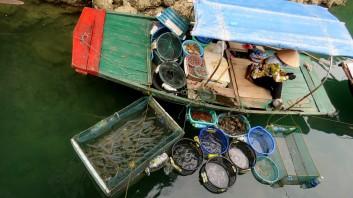 Muitos tipos de mariscos