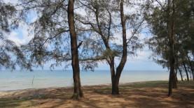 Uma das praias com criação de ostras