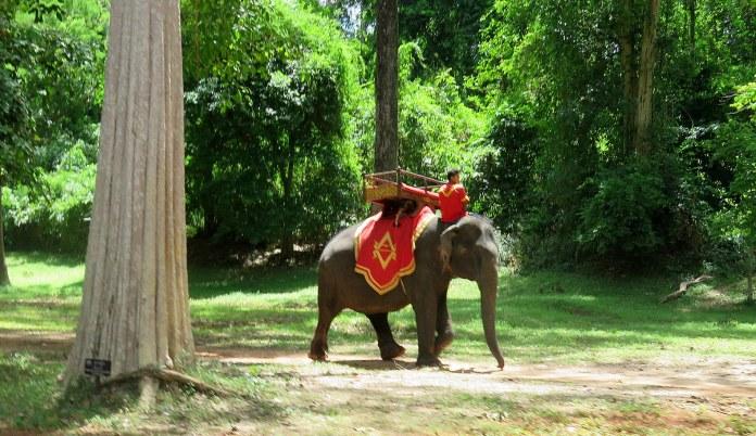 Há elefantes (e macacos) no trajeto entre um templo e outro