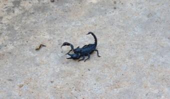 É sempre uma boa ideia olhar onde pisa: há aranhas e escorpiões pelo caminho