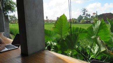 Balcão com vista para arrozal