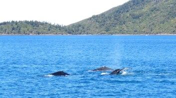 Baleias acompanhando o barco
