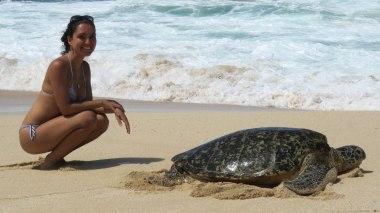 Tartaruga em praia entre Laniakea e Haleiwa